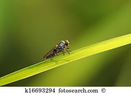 Tabanidae Stock Photos and Images. 100 tabanidae pictures and.