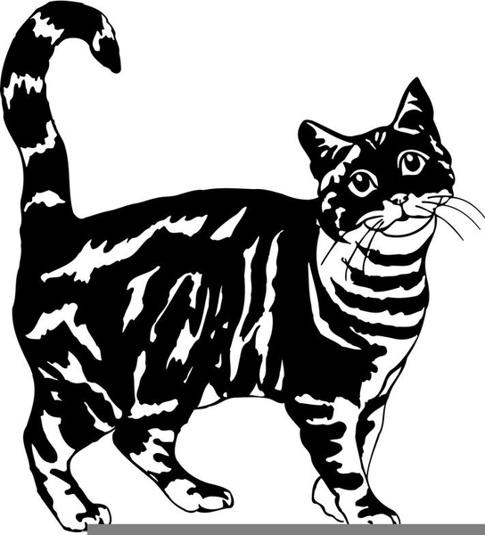 Tabby and white cat clipart Transparent pictures on F.