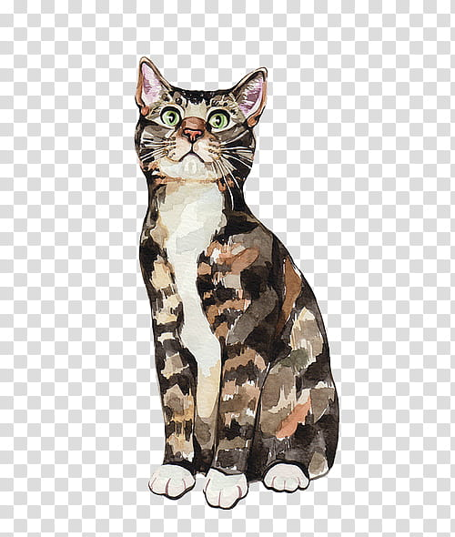 Tricolor cat, calico cat lying transparent background PNG.