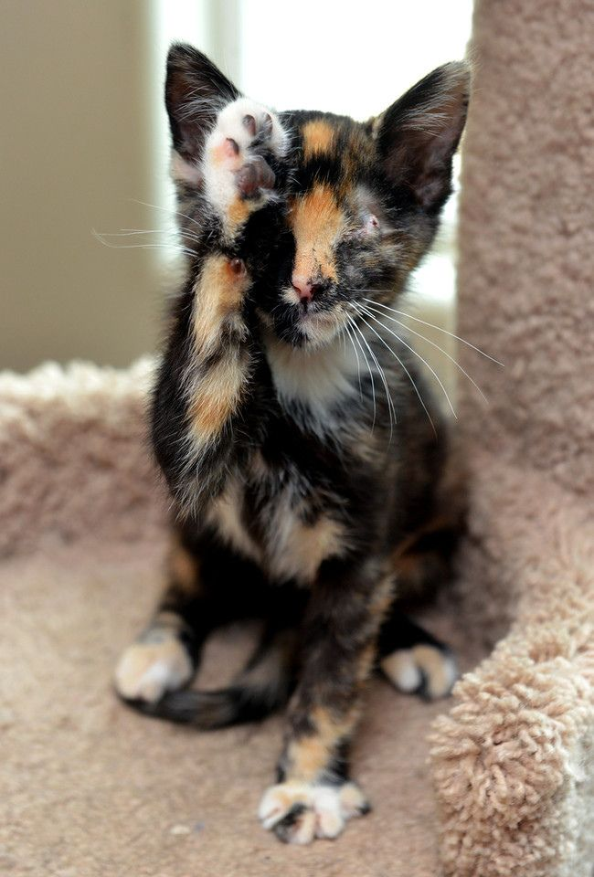 This calico is so patterned you almost loose sight of her.