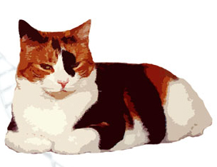 The Genetics of Calico Cats.