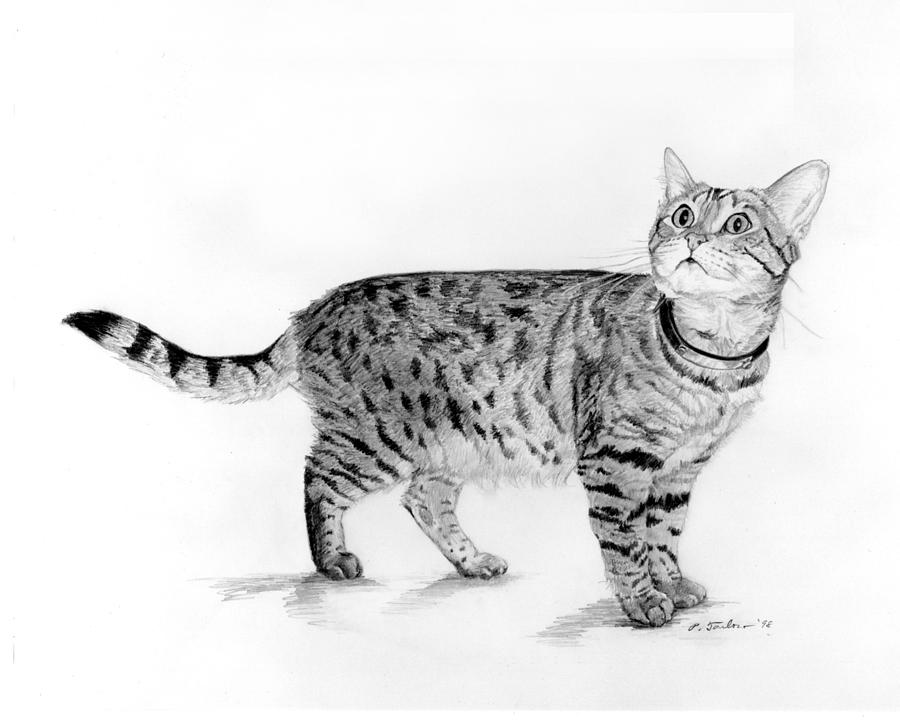 Tabby Cat Looking Up.