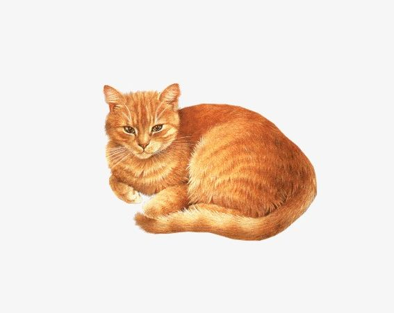 Tabby Cat PNG, Clipart, Animal, Backgrounds, Beautiful, Cat.