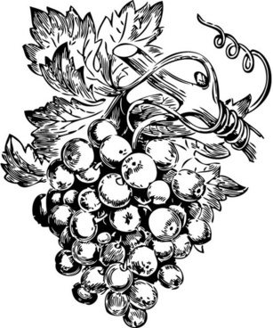 Grape free vector download (409 Free vector) for commercial use.