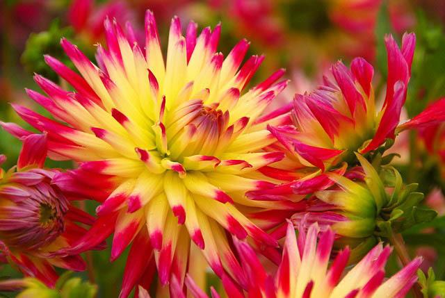 tahiti flower.