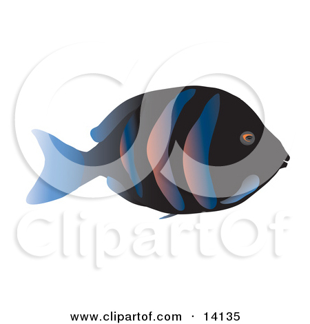 Tropical Fish With a Black Base, Stripes and a Blue Tail Fin.
