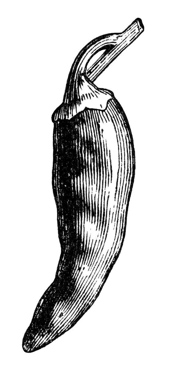 black and white clip art, bell pepper clipart, chili pepper.