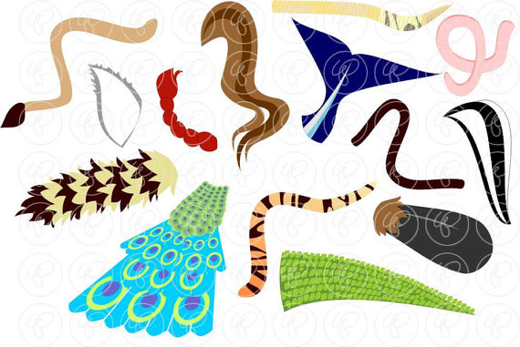 Animal tail clipart.