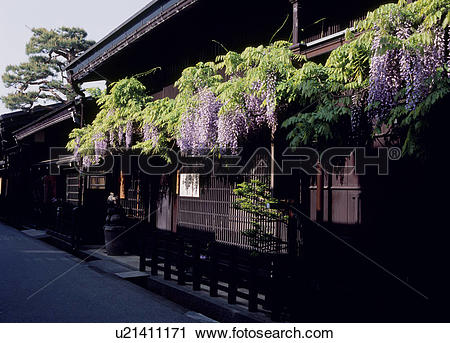 Stock Photography of Wisteria and Japanese Architecture, Takayama.