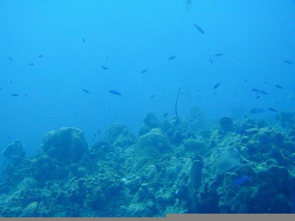 Deep Ocean Clipart.