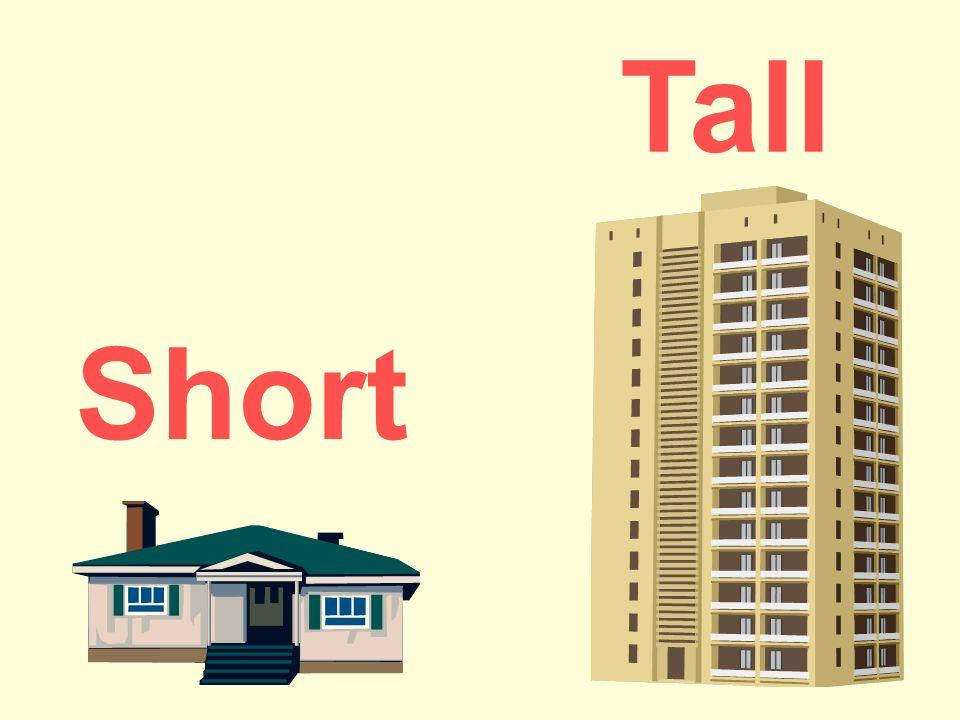 Short or Tall?. Short Tall Short Tall Short Tall ppt download.