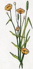 Tall Orange Flowers.