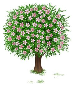 tall flowers big bloom clipart png.