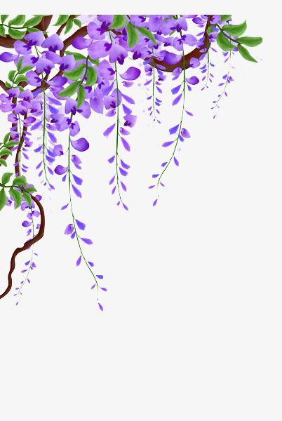 Wisteria Vines Picture Material, Wisteria, Flower Vine.