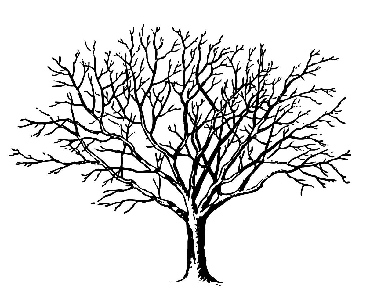 4 Winter Tree Images.