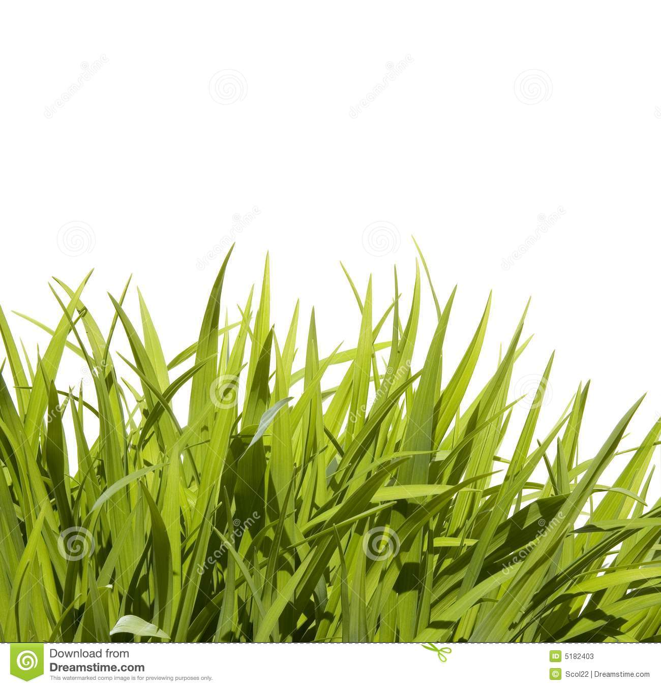 Wild Tall Grass Stock Photos.