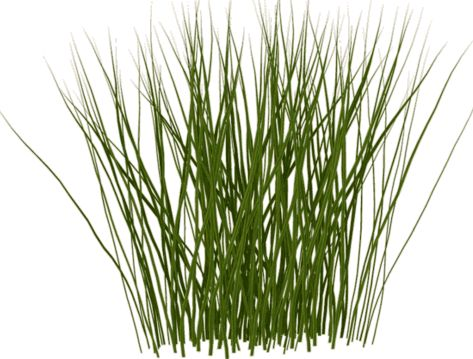 1000+ images about Tall Grass on Pinterest.