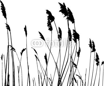 50 best images about Tall Grass on Pinterest.