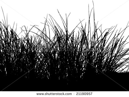 15 Tall Grass Vector Images.