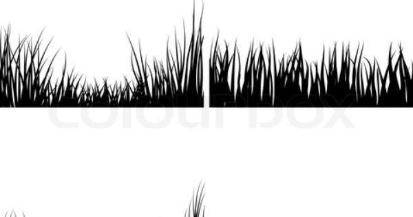 border grass with grass clump.