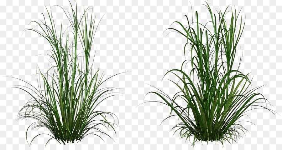 Ornamental Grass Clip Art.