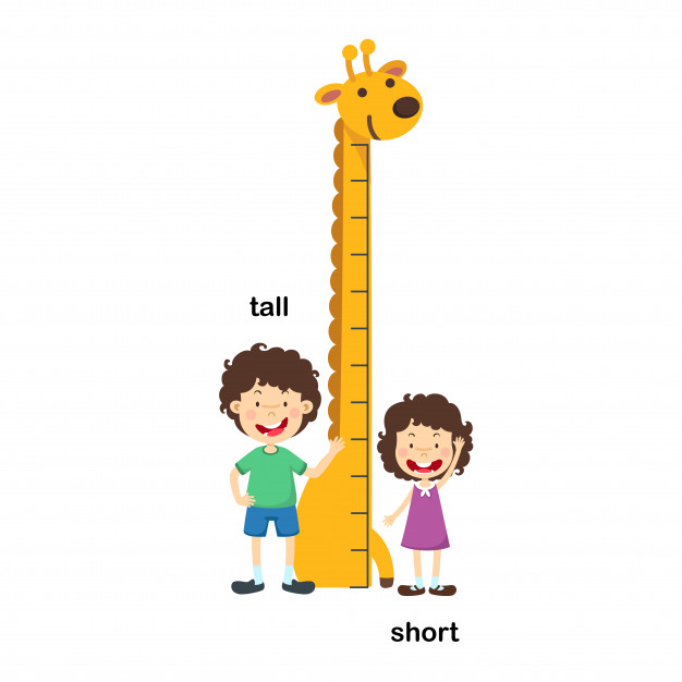 Opposite tall and short vector illustration Vector.