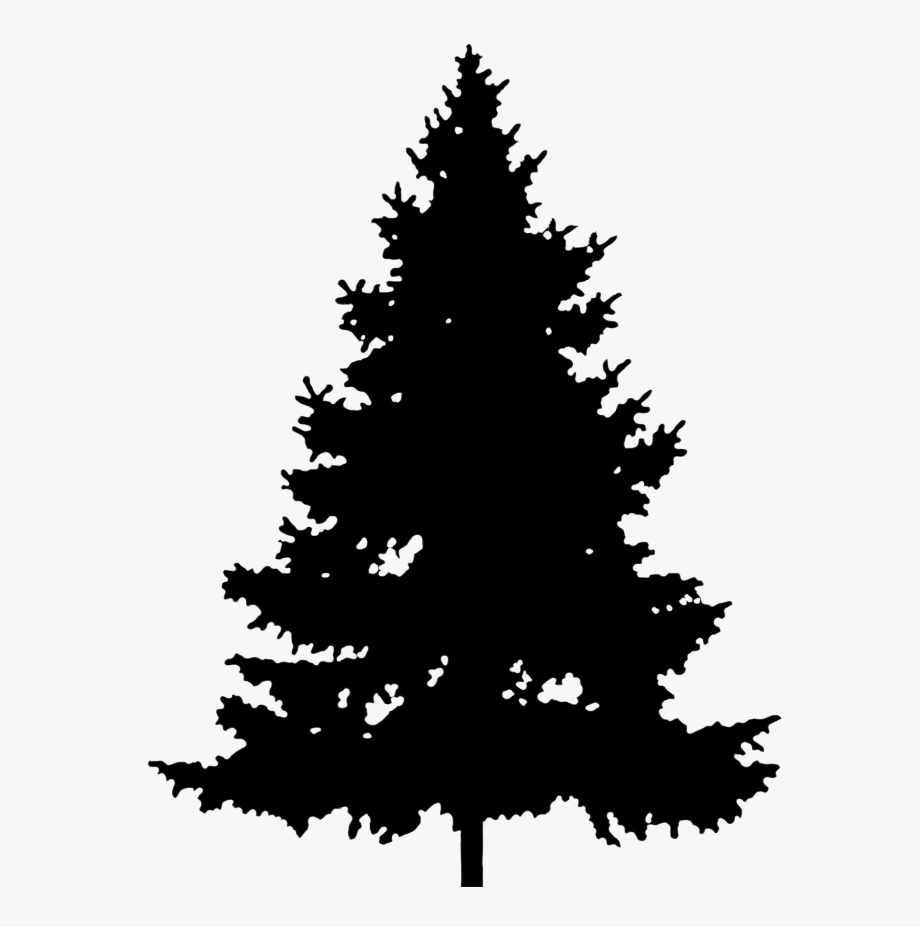Tall Spruce Silhouette.