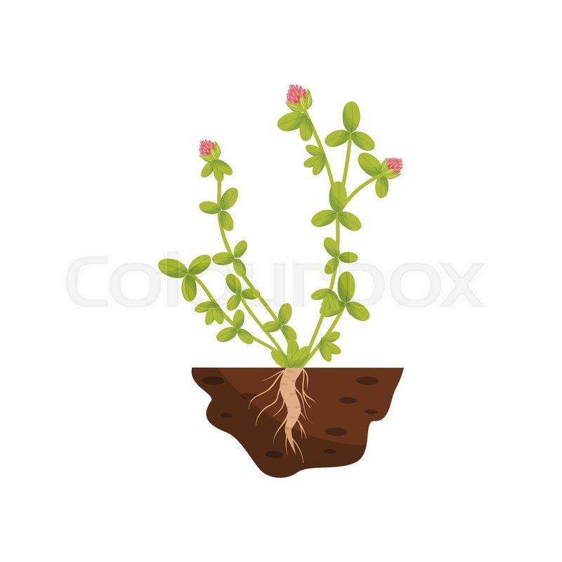 Plant with small leaves, pink fluffy.