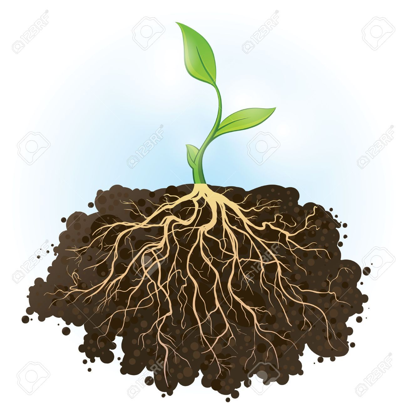 plant with roots.