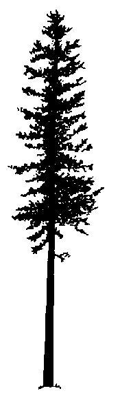 Tall Christmas Tree Clipart.Tall Skinny Christmas Tree Clip Art 20 Free Cliparts