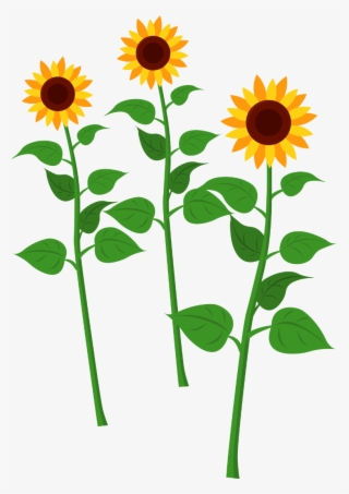 Sunflower Clipart Png PNG Images.