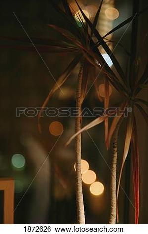 Stock Images of trees growing indoors with tall, thin trunks.