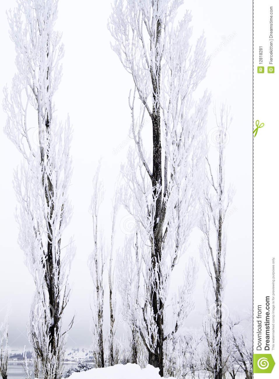 Tall thin tree clipart.