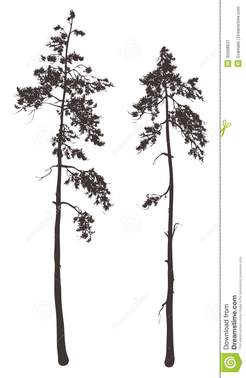 Tall Thin Trees Clipart Clipground