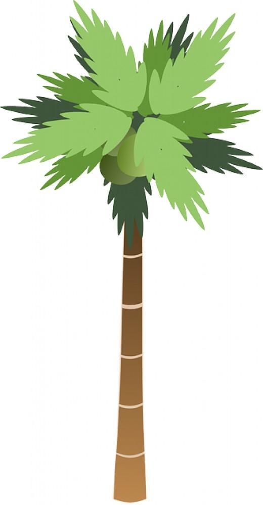 Tall Tree Clipart.