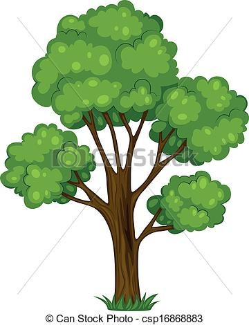Tall tree Vector Clip Art EPS Images. 2,440 Tall tree clipart.
