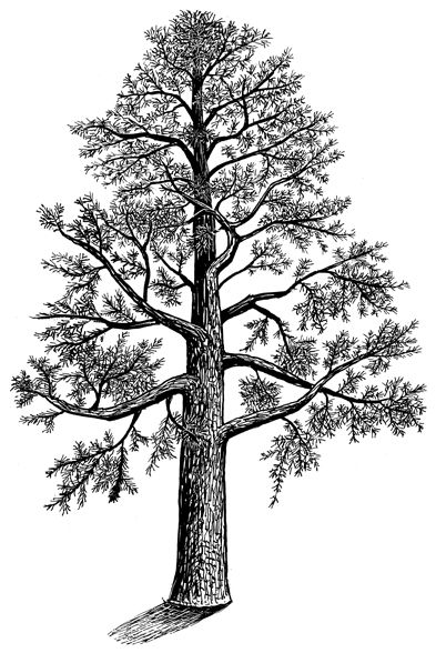 1000+ images about Trees etc. on Pinterest.