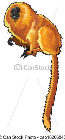 EPS Vector of golden lion tamarin.