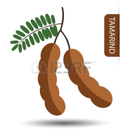 220 Tamarind Cliparts, Stock Vector And Royalty Free Tamarind.