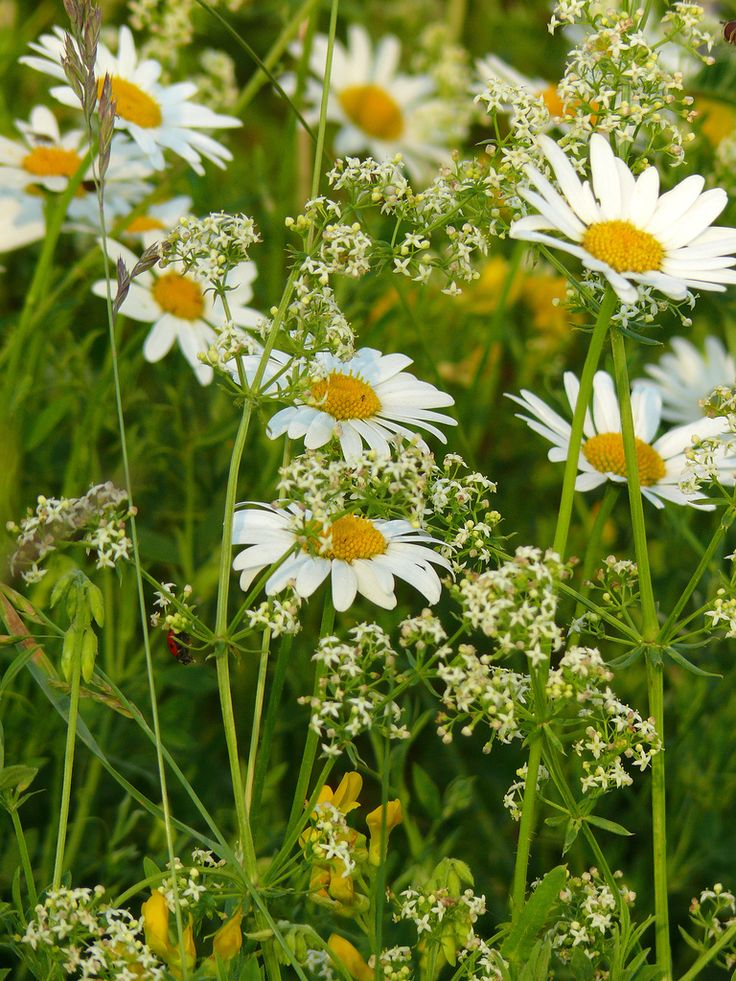 1000+ images about Wild Flowers on Pinterest.