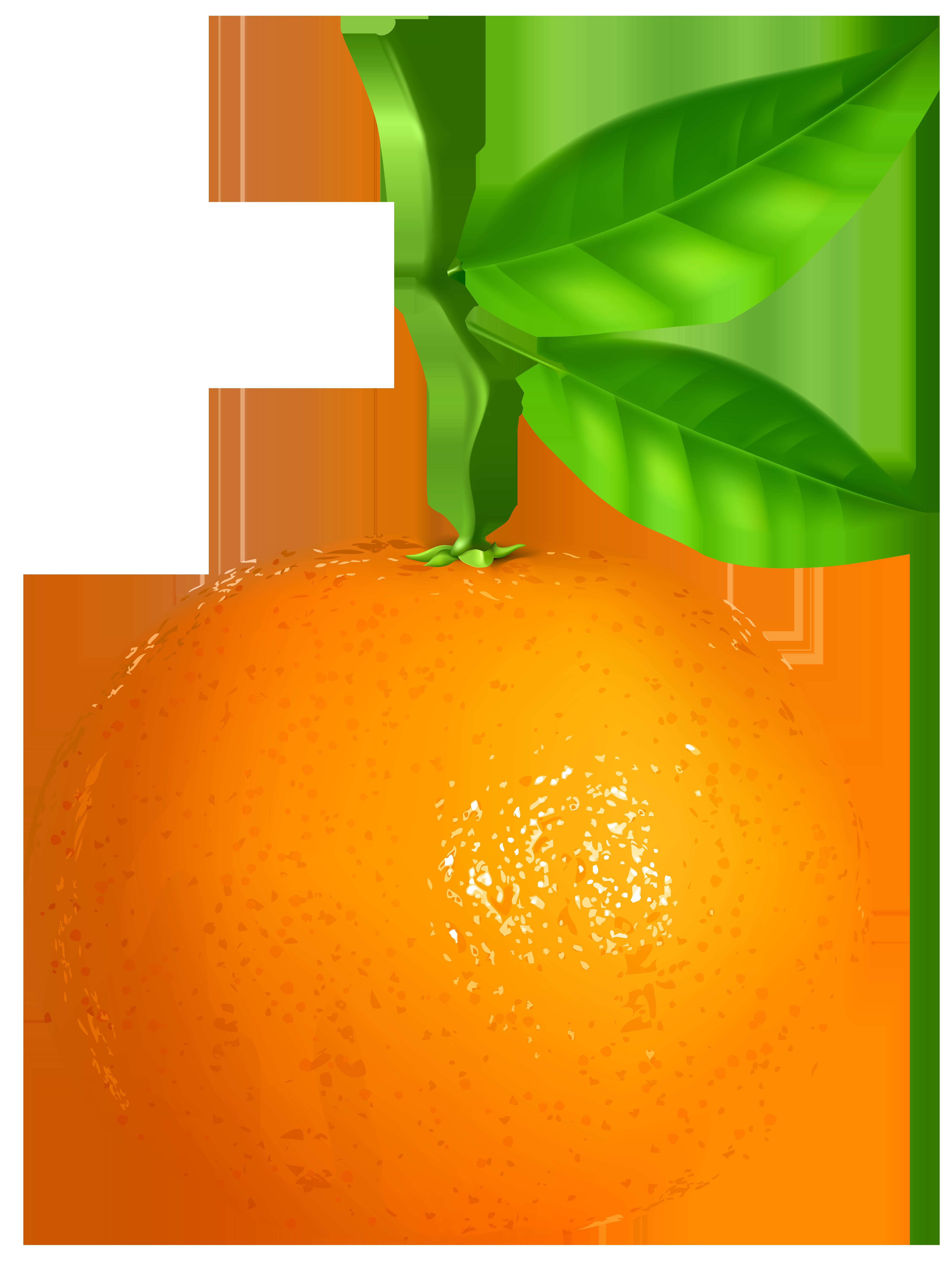 Tangerine Transparent PNG Clip Art Image.
