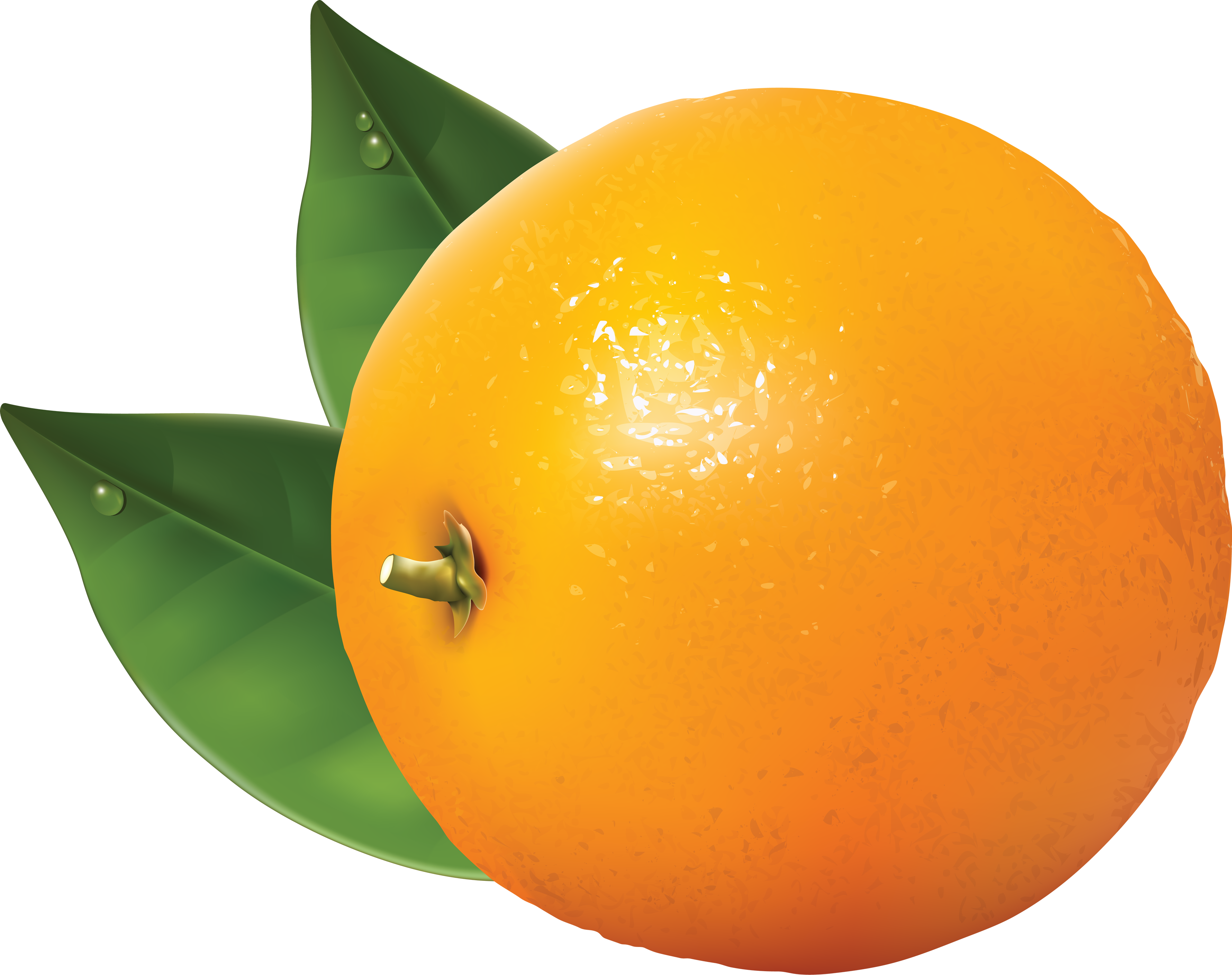Orange Tangerine Clip art.