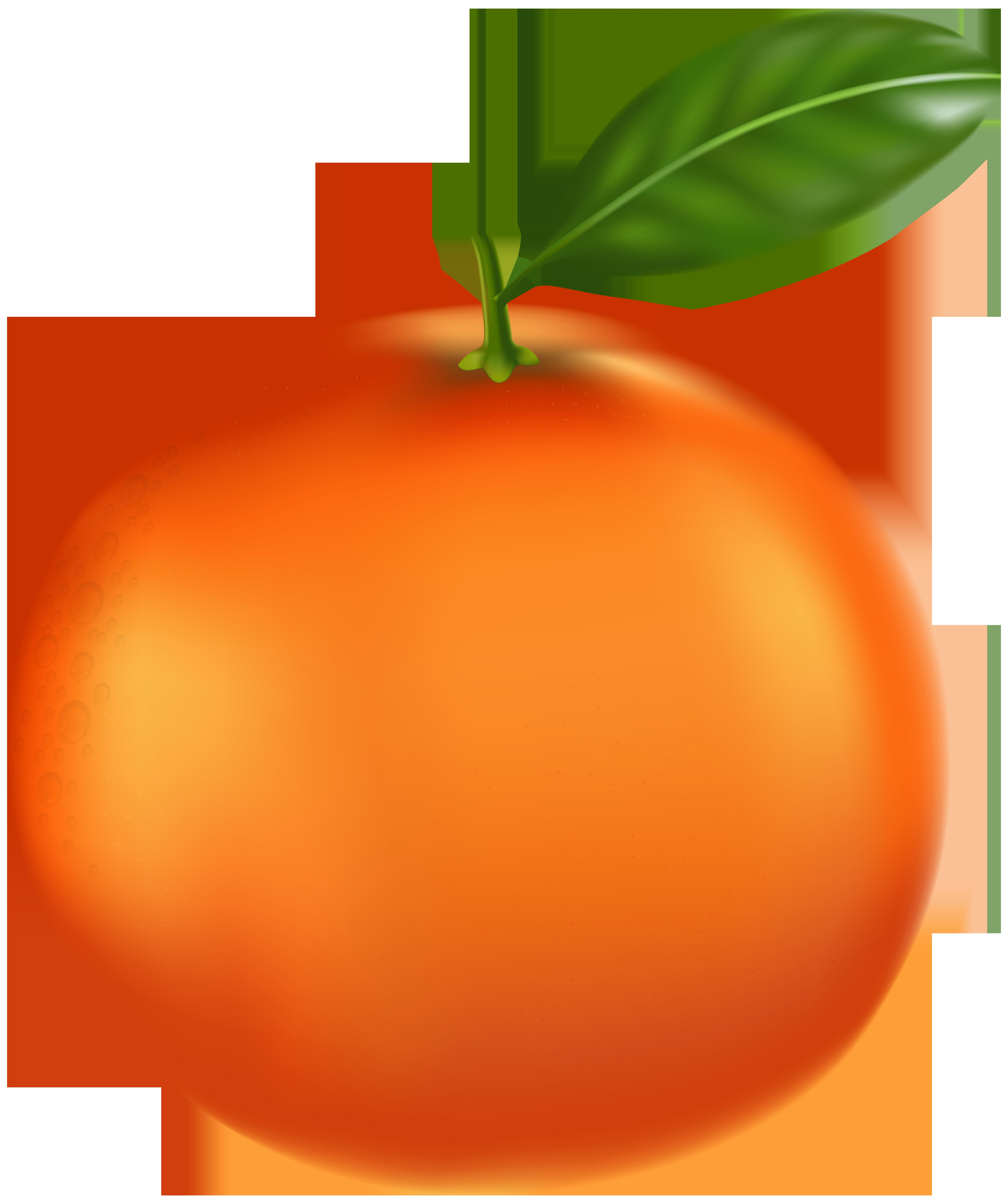 Tangerine PNG Clip Art.