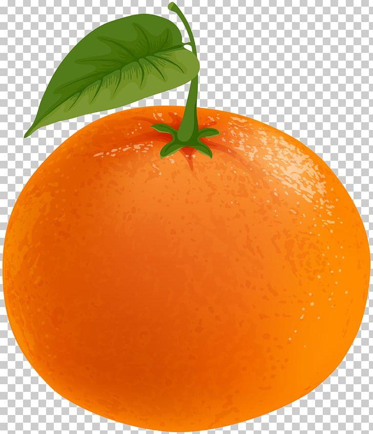Clementine Tangerine Tangelo Grapefruit Orange PNG, Clipart.