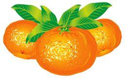 Tangerine Stock Illustrations.