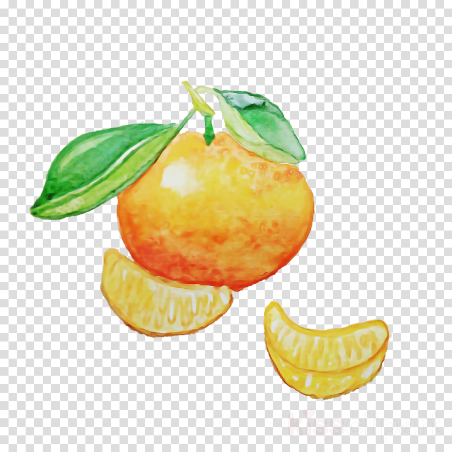 fruit citrus tangerine yellow food clipart.