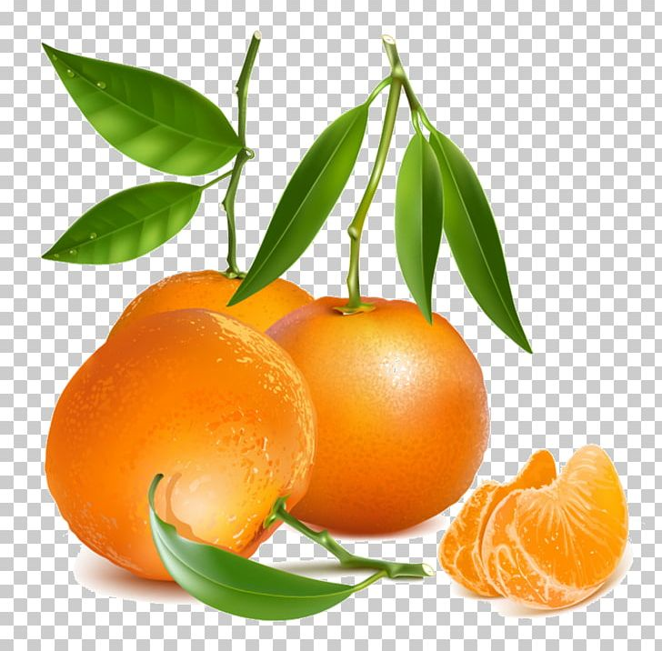 Tangerine Drawing Mandarin Orange PNG, Clipart, Art, Bitter.