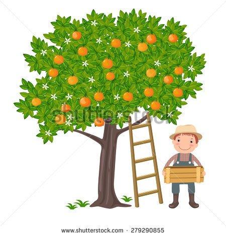 Showing post & media for Cartoon tangerine tree.