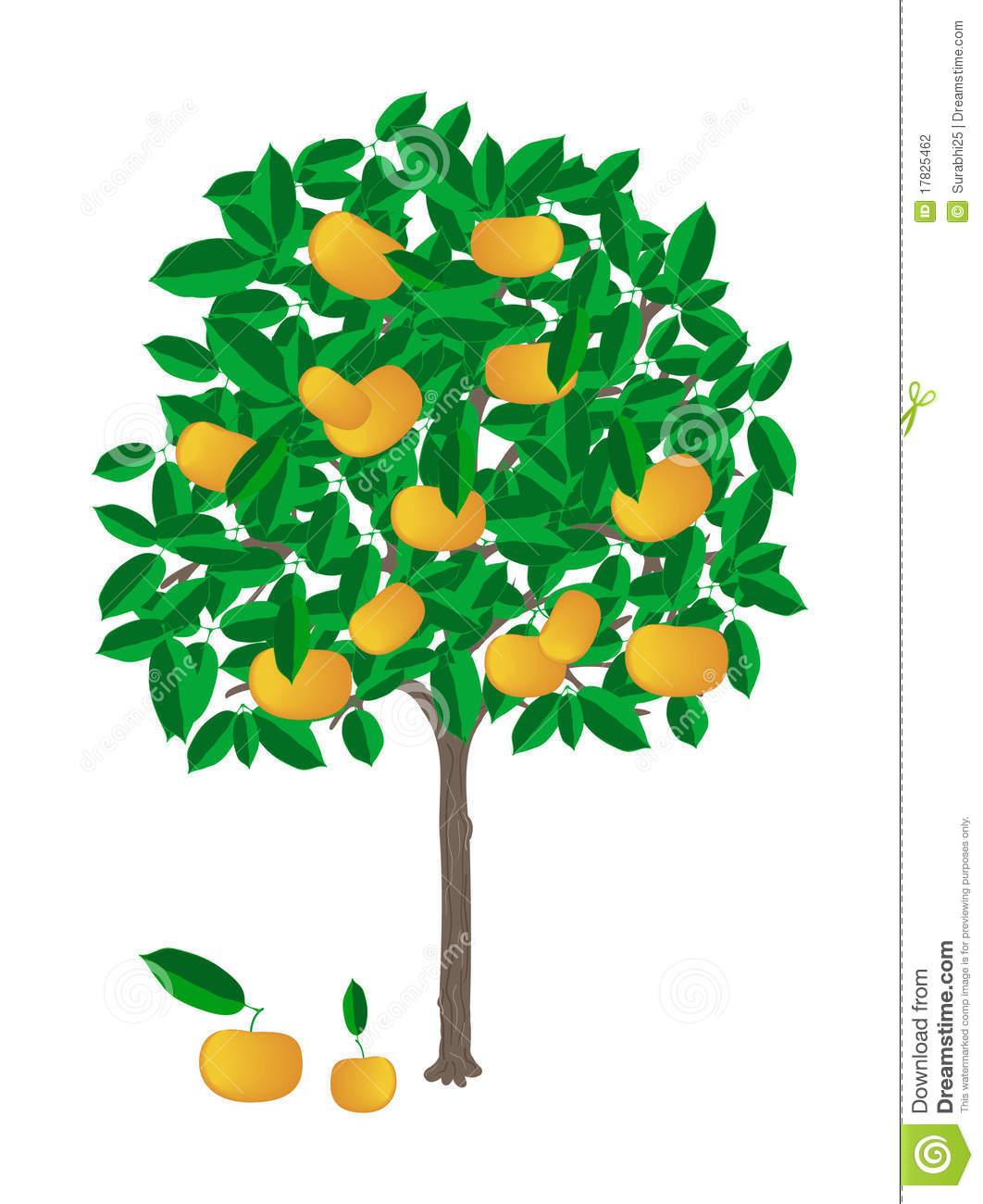 Tangerine Tree Stock Photography.