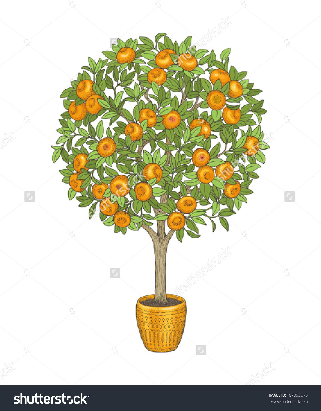 Tangerine Tree Clip Art.